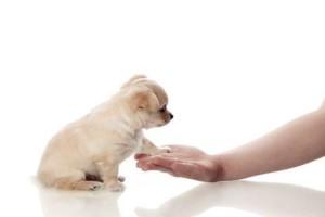 Consejos-para-educar-al-perro