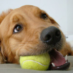 Entrenar a tu perro para que no muerda…