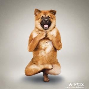 adiestramiento-de-perros-y-Mascotas-552