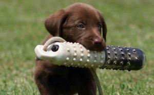 adiestramiento-mascotas