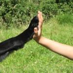 Adiestramiento Canino Básico