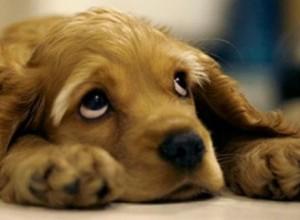 cachorro-perro-pensando