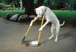consejos-para-entrenar-perros-MisAdorablesPeludos-002