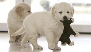 educar-a-cachorro