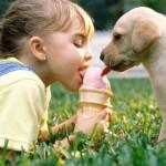 11 Tips para entrenar a tu cachorro