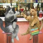 imagenes-graciosas-gatos-p