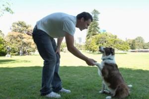 mis-adorables-peludos-entrenar-perros-007
