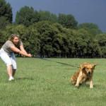 Aprende como pasear a tu perro