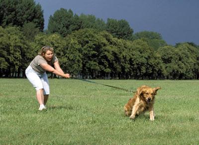 perro-correa