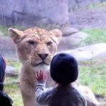 Niños en el ZooLógico Compilación – Kids At The Zoo Compilation