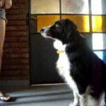 Como enseñar a tu perro a sentarse